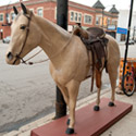 horse Charlie